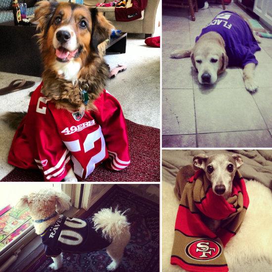 Football Dog Costumes