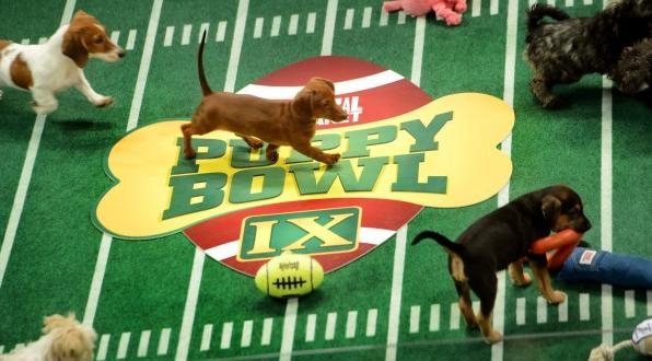 Puppy Bowl Field