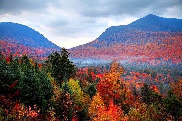 Denver Fall Foliage